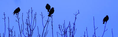 Photograph - Early Birds by Mark Blauhoefer
