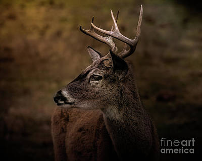 Art Print featuring the photograph Early Buck by Robert Frederick