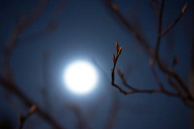 Photograph - Early Buds In Moonlight by Scott Rackers