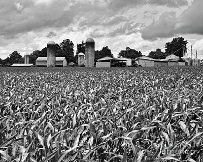 Photograph - Early Corn by Patrick M Lynch