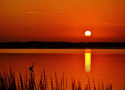 Photograph - Evening Heron - A Heron Takes A Summer Strolls Along The Shallows Of A Peaceful Orange Bay At Sunset by William Bartholomew
