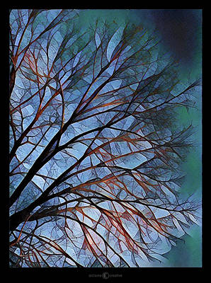 Photograph - Early Evening Tree by Tim Nyberg
