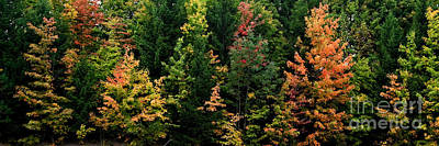 Photograph - Early Fall Colors Mid Ohio by Fred Lassmann