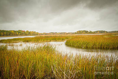 Nikki Vig Royalty-Free and Rights-Managed Images - Early Fall Over the Marsh by Nikki Vig