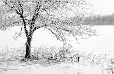 Early Frost Art Print