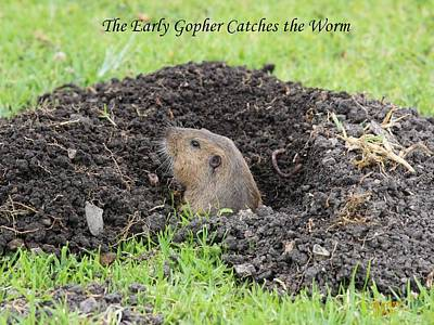 Early Gopher Catches The Worm Art Print