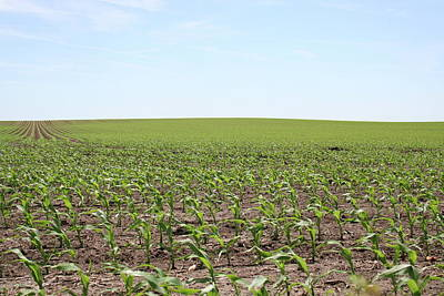 Photograph - Early June Maize by Dylan Punke