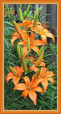 Digital Art - Early Lilies Framed by Doug Morgan