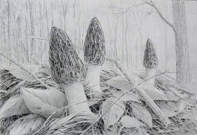 Early May Morchella  Art Print by Steve Mountz
