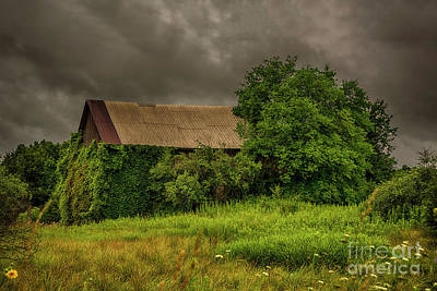 Photograph - Early Monring Rain by JRP Photography