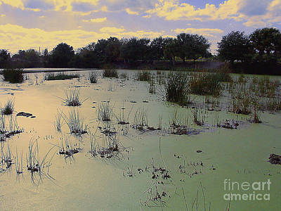Photograph - Early Morning At A Bird Sanctuary In South Florida by Merton Allen