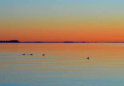 Photograph - Early Morning Birds Two  by Lyle Crump