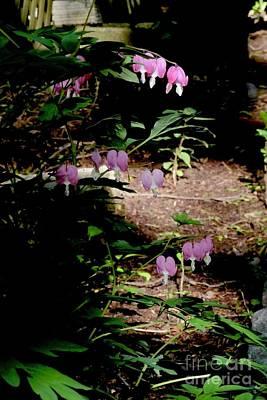 Photograph - Early Morning Bleeding Hearts - Botanical by Margie Avellino