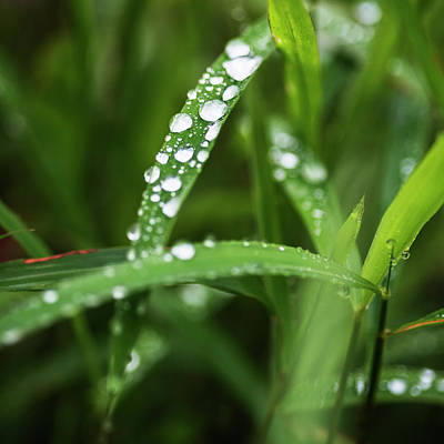 Photograph - Early Morning Dew Drops by Vishwanath Bhat