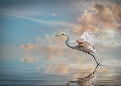 Photograph - Early Morning Egret by Brian Tarr