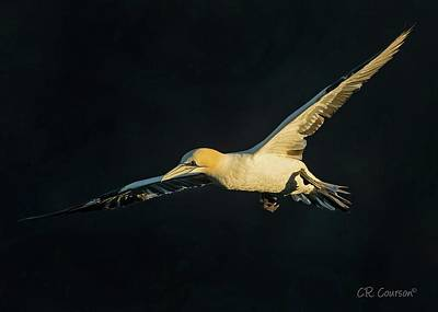 Photograph - Early Morning Flight by CR Courson