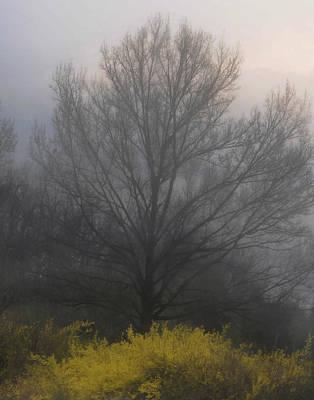 Color Stretching Digital Art - Early Morning Fog by Gerlinde Keating - Galleria GK Keating Associates Inc