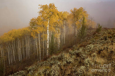 Photograph - Early Morning Fog by Lynn Sprowl