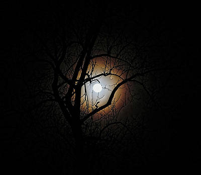 Photograph - Early Morning Full Moon by Ronda Ryan