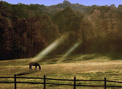 Art Print featuring the photograph Early Morning Grazing by Diane Merkle