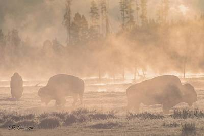 Photograph - Early Morning Grazing In The Mist by CR  Courson