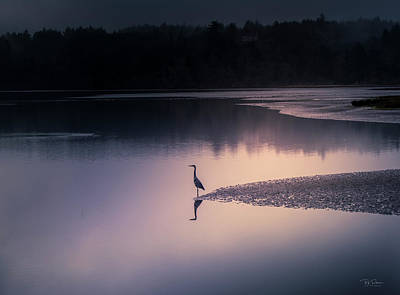 Photograph - Early Morning Greeter by Bill Posner