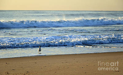 Photograph - Early Morning Gull II by Mary Haber