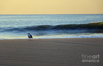 Photograph - Early Morning Gull by Mary Haber
