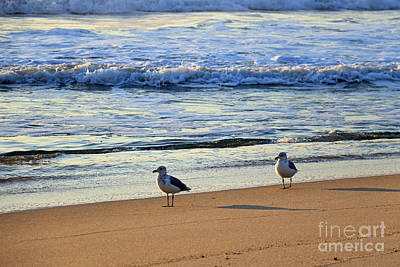 Photograph - Early Morning Gull Pair by Mary Haber