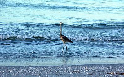 Photograph - Early Morning Heron Beach Walk I by Debbie Oppermann