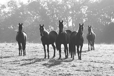 Early Morning Horses Art Print by Hazy Apple