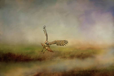 Photograph - Early Morning Hunt Wildlife Art by Jai Johnson