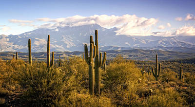 Photograph - Early Morning In The Sonoran Desert  by Saija Lehtonen