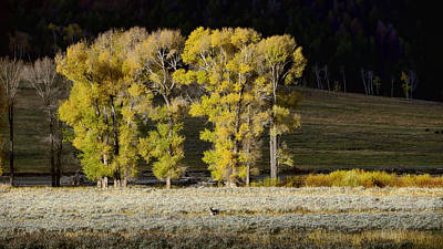 Photograph - Early Morning Lamar Valley by Bill Dodsworth