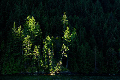 Nootka Sound Photograph - Early Morning Light - 365-160 by Inge Riis McDonald