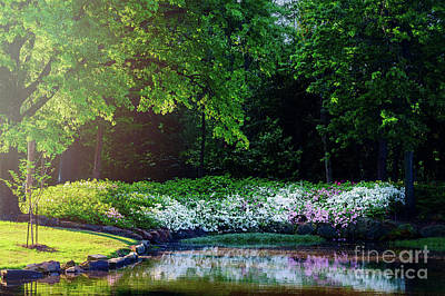 Early Morning Light At The Azalea Pond Art Print by Tamyra Ayles