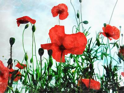 Photograph - Early Morning Poppy Moment by Dorothy Berry-Lound