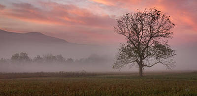 Photograph - Early Morning Promises by Everet Regal