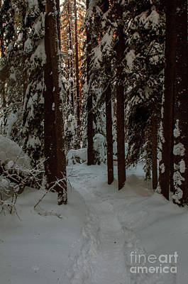 Photograph - Early Morning Snowshoe by Rod Wiens