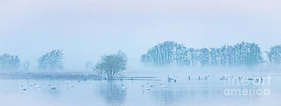 Photograph - Early Morning Spring In Holland by Casper Cammeraat