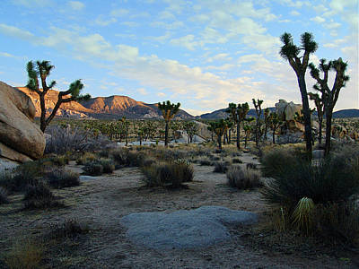 Photograph - Early Morning Sun - Joshua Tree National Park by Glenn McCarthy Art and Photography