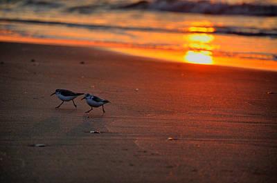 Bird Photograph - Early Morning Sunrise Run by Emily Stauring