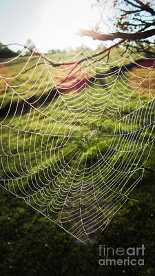 Photograph - Early Morning Web by Cheryl Baxter