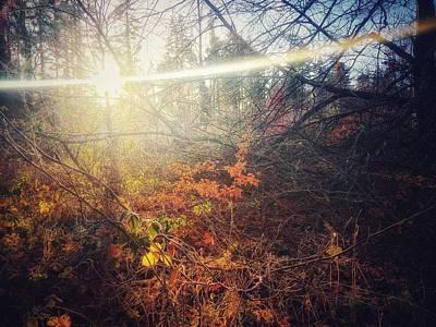 Photograph - Early Morning Winter Sun by No Alphabet