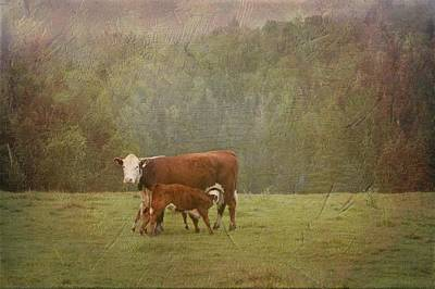Photograph - Early Morning Breakfast-cow Style by Betty  Pauwels