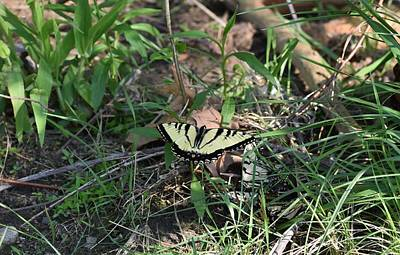 Photograph - Early Season Butterfly 1 by Nina Kindred