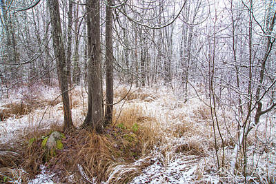 Photograph - Early Snow by Alana Ranney