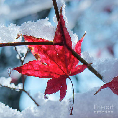 Photograph - Early Snow by Garry McMichael