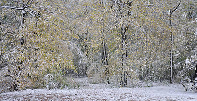 Photograph - Early Snow In October Beech Forest In Autumn Leaves by Martin Stankewitz