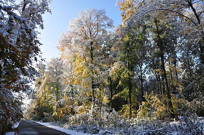 Photograph - Early Snow In October Beech Forest In Autumn by Martin Stankewitz